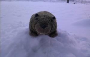 Stormy Marmot